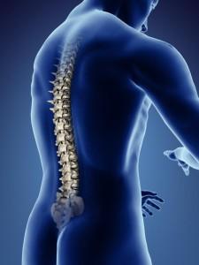 нейро спина