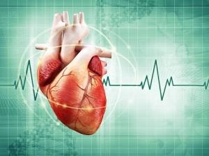 сердце экг